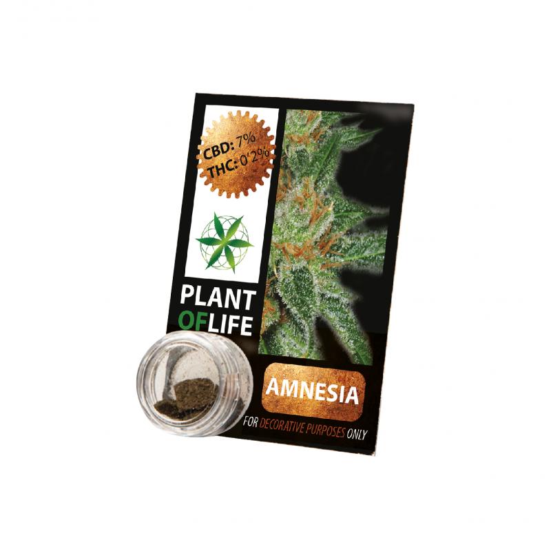 Solide de CBD 3,8% Plantoflife amnesia